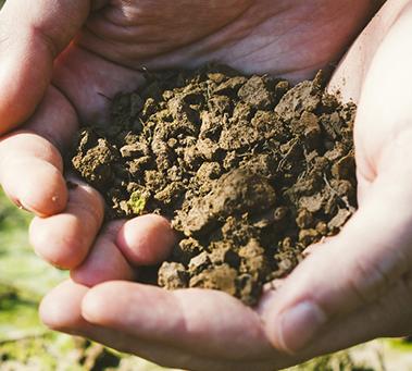 特定汚染土壌等
